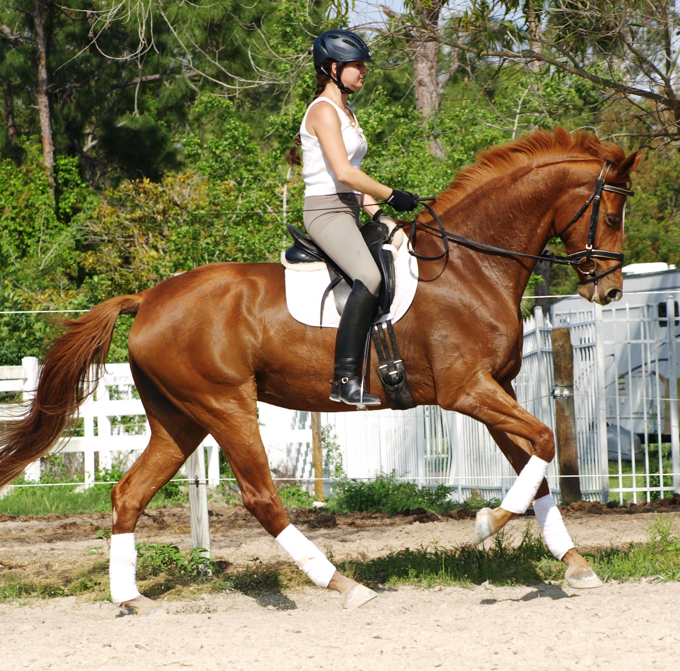 Horse: Farm SOLD Horse Leela