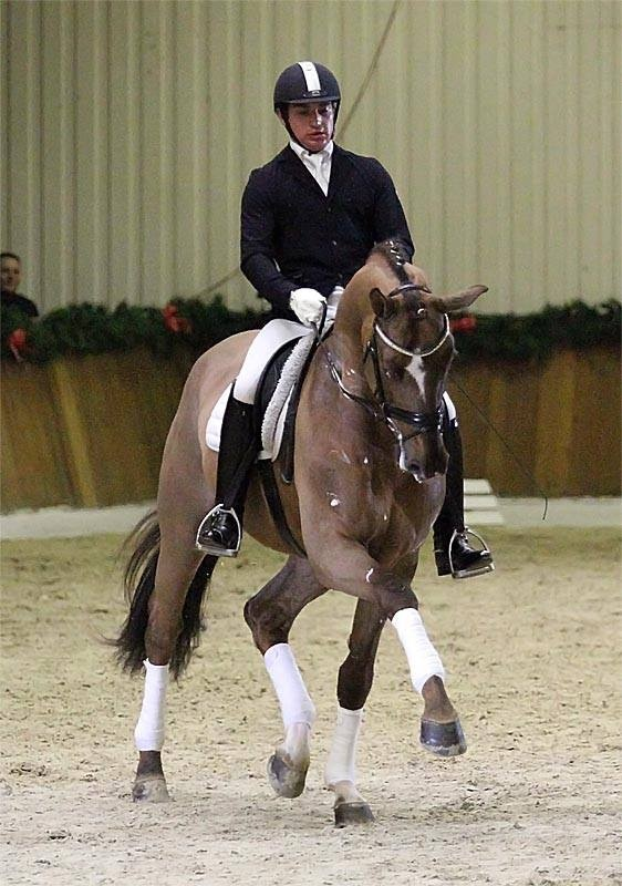 Hw farm proudly presents some information about stallion for Domon frederic