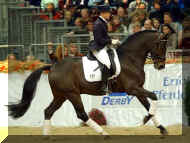 dark bay Oldenburg stallion for sport horse breeding program Diamond Hit