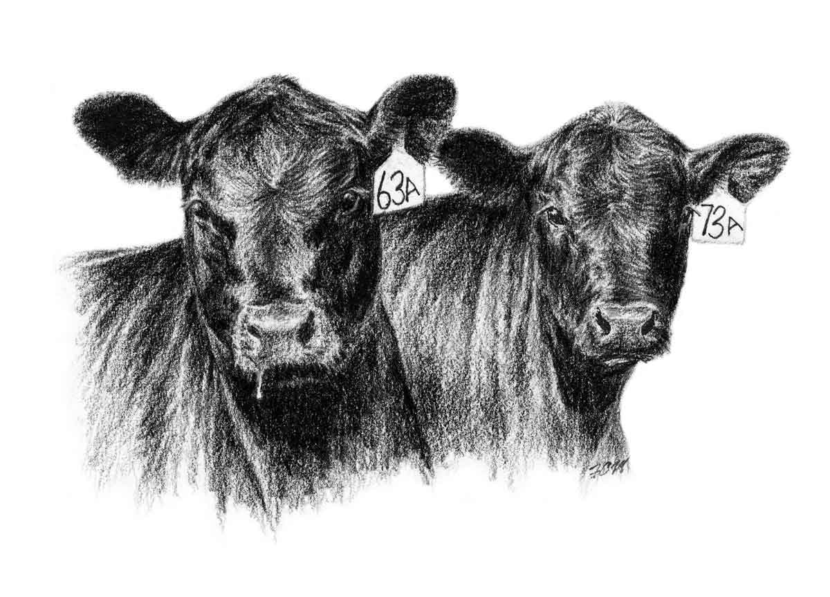 registered black angus of lee county clipart