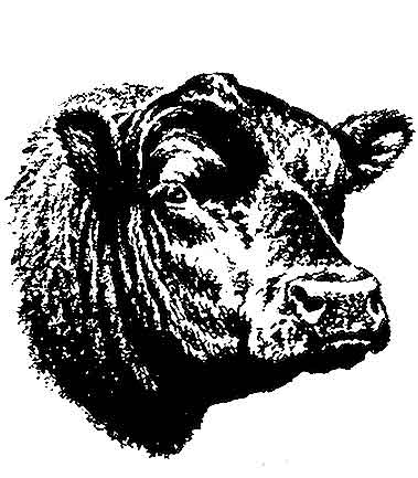 Registered Black Angus of LEE County